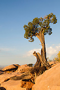 A single tree growing out of the rocks at Toroweap on the north rim of the Grand Canyon, Arizona. Missoula Photographer