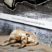 Central America, Cuba, Havana. A dog takes in the sun on an Old Havana street.