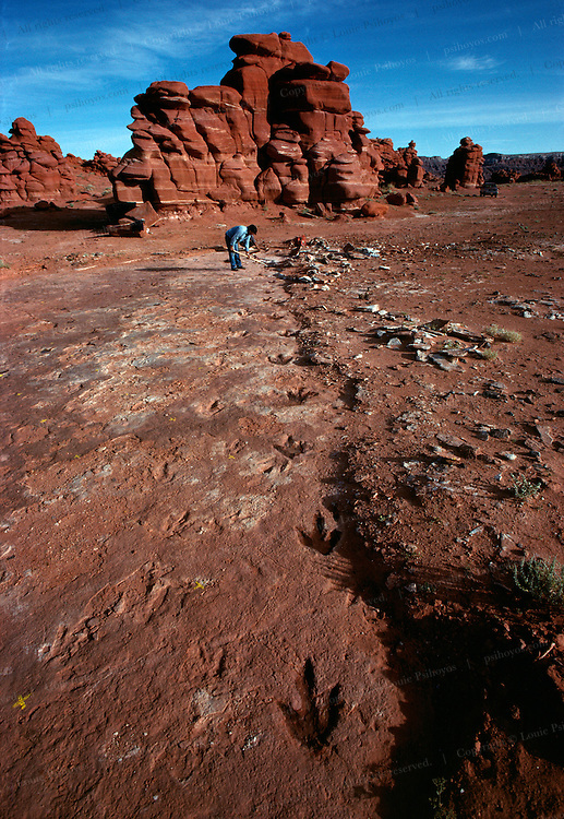 Indian guide, Floyd Stevens, uncovers dinosaur tracks in a remote area of the Navajo Reservation near Cameron, Arizona.