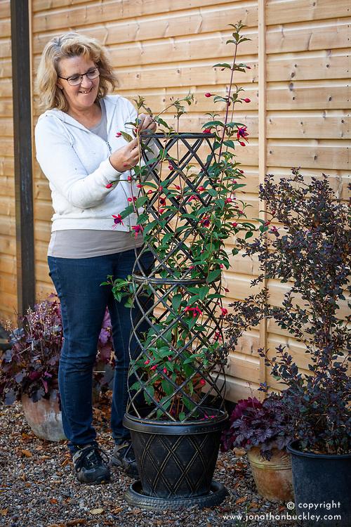 Plant support trellis for climbing fuchsia