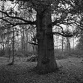 Thornham Walks, Suffolk 2014