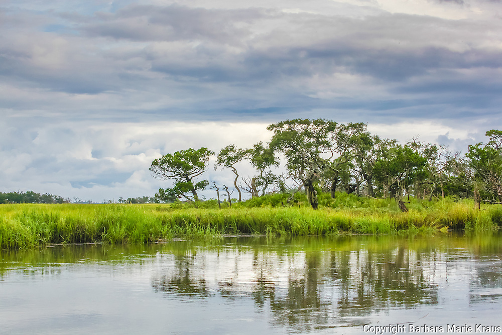 A stand of trees on an island or hammock in a salt marsh along the Southern Atlantic Coast.