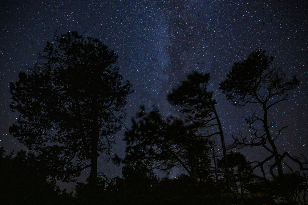 Trees and the starry night sky as seen from Tonquin Beach in September, Vancouver Island near Tofino, BC, Canada.