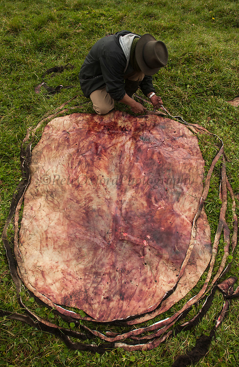Ecuadorian Chagras (cowboy) cutting bull hide into one long strip to make 'beta' (lasso)<br /> Yanahurco Hacienda (Ranch) - largest privately owned ranch in Ecuadorian Andes (25.000 hectares)<br /> base of Cotopaxi Volcano<br /> Andes<br /> ECUADOR.  South America