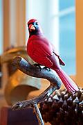 """""""Cardinal,"""" bird carving by George Gilpin"""