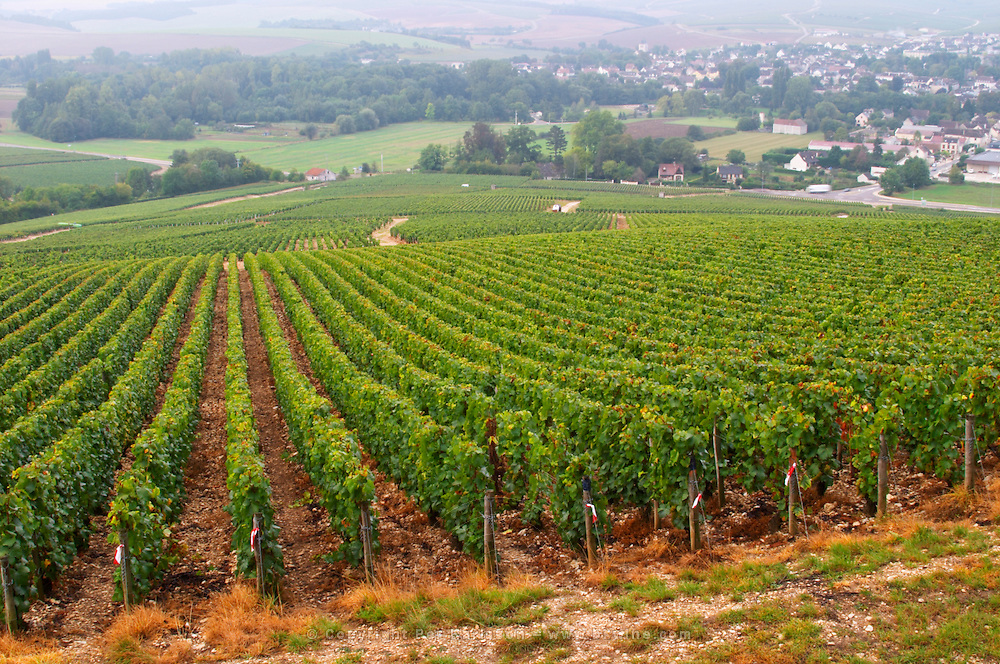 The village Chablis, Bourgogne, and the Les Clos grand cru vineyard seen from top of the hill