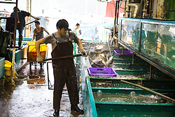 Fish monger transfers fresh fish from net to water filled containers at the Hong Kong Fish Market in China.