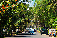 Tuk tuks driving down a palm tree lined avenue, Bahir Dar, Ethiopia