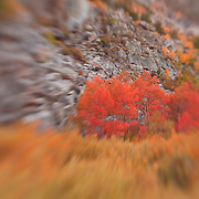 Table Mountain Fall Color- Bishop Creek - Lensbaby