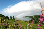 A scenic view from Monashka Bay, Kodiak, Alaska with a rainbow and fireweed.