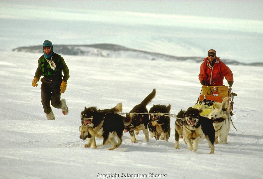 Polar Huskies Mawson Station Antarctica,