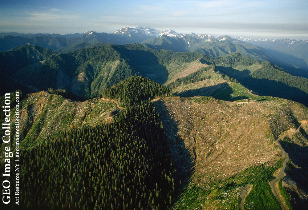 Aerial view showing clear-cuts with Mount Olympus in the background.