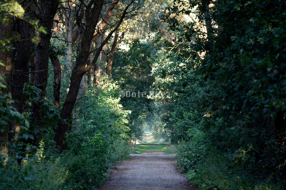 path in the woods with lush green foliage