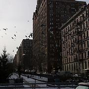 Birds over Park Avenue