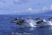 striped dolphins, Stenella coeruleoalba, Azores Islands, Portugal ( North Atlantic Ocean )