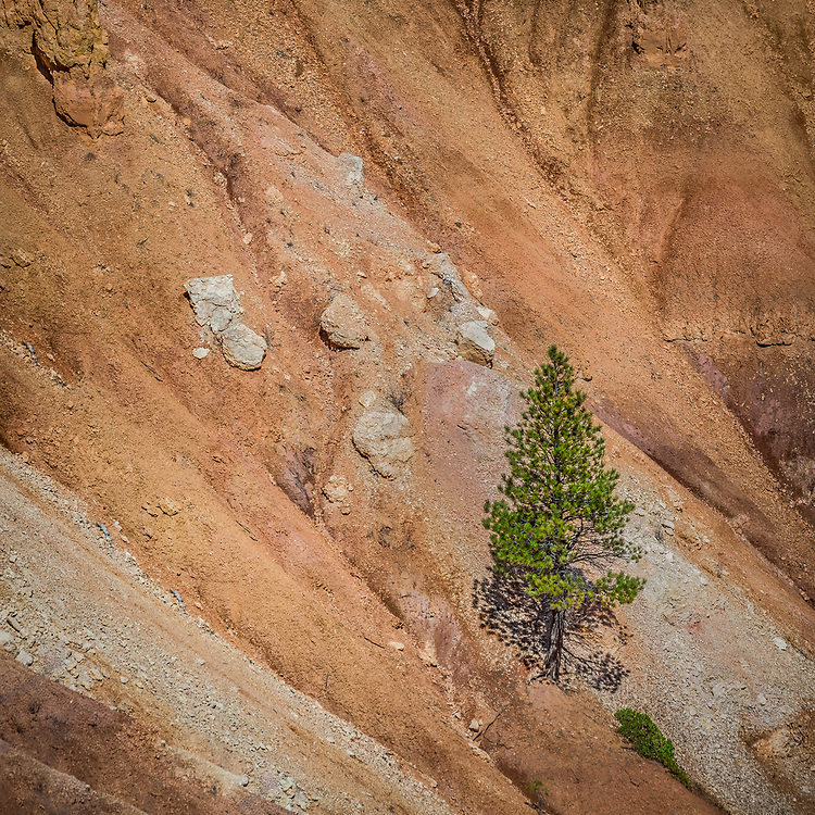 A lone tree stands confidently amid the beautiful red rocks of Bryce Canyon National Park in Utah.