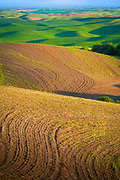 Farm fields surrounding Steptoe Butte in the eastern Washington Palouse area