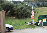 A fox, a cat and a plastic sheep at the Pebsham Recycling centre. West St. leonards,  Bexhill, East Sussex, 20 November 2016