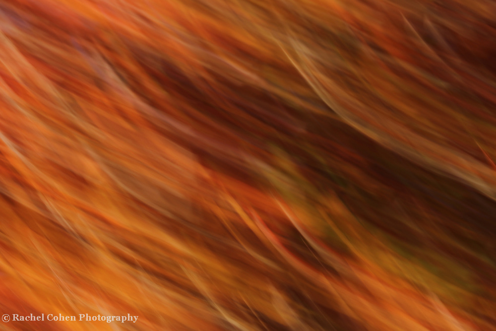 """""""Luminosity"""" <br /> <br /> Wonderful strands of orange, gold, amber, and brown in an abstract!"""