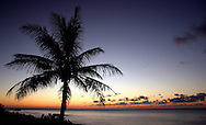 Hawaiian sunset with palm tree on the Pacific Ocean