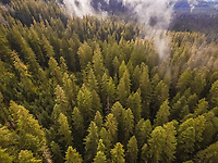 Aerial view of a forest in Oregon, USA.