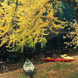 Boats under a silver maple on the banks of the Contoocook River in Contoocook, NH.  Merrimack watershed.  Contoocook, NH