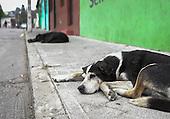 Street Dogs of Valparaiso