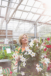 Mature woman trimming flowers in garden centre, Augsburg, Bavaria, Germany