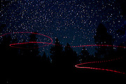 The path of a big brown bat (Eptesicus fuscus) is traced in this long exposure. Bat researchers attached a small light to the bat before releasing it to fly so it's high-frequency calls could be recorded by scientists. The light falls off after a few minutes. Ochoco National Forest, Oregon.