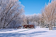 1937 McCormick Deering tractor with plough in a field surrounded by trees covered by heavy hoarfrost<br />Near Deacon's Corner<br />Manitoba<br />Canada