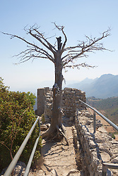 Tree With Notes, St. Hilarion Castle