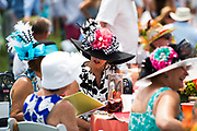 April 29, 2017, 22nd annual Queen's Cup Steeplechase. Ladies in sunhats on race day