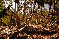 Coconut Trees at Devil's Beach, Turtle Island, Yasawa Islands, Fiji