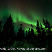 Aurora Borealis also known as Northern Lights in the sky above Wapusk National Park. Manitoba