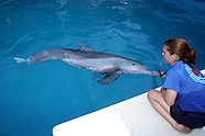 Dolphins Prosthetic Tail