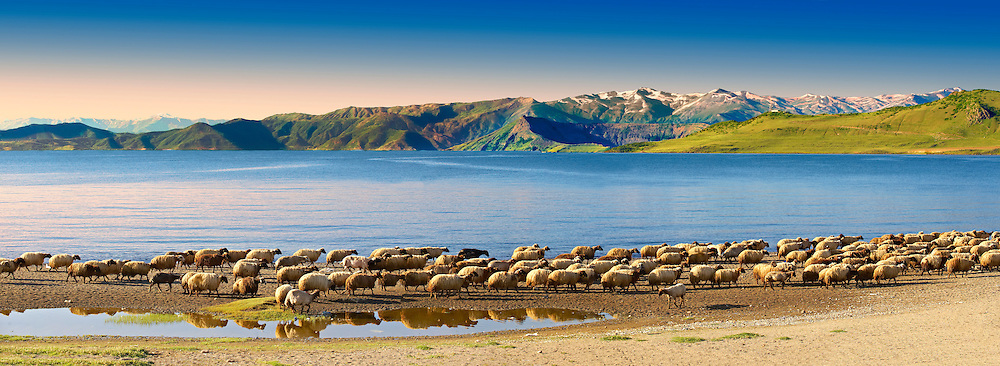 Shepherds & their sheep on the shotre of Lake Van, Turkey3 .<br /> <br /> If you prefer to buy from our ALAMY PHOTO LIBRARY  Collection visit : https://www.alamy.com/portfolio/paul-williams-funkystock/lakevanturkey.html<br /> <br /> Visit our TURKEY PHOTO COLLECTIONS for more photos to download or buy as wall art prints https://funkystock.photoshelter.com/gallery-collection/3f-Pictures-of-Turkey-Turkey-Photos-Images-Fotos/C0000U.hJWkZxAbg