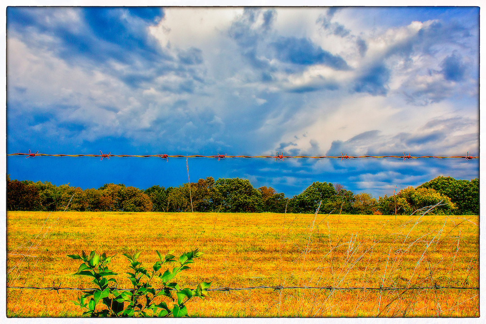 A field of golden grass that has begun to die from the Autumn chill is seen framed by fall trees beyond the barbed wire that keeps mother nature in.