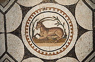 Picture of a Roman mosaics design depicting  animals charmed by  music being played by Orpheus, from the ancient Roman city of Thysdrus, Bir Zid area. 2nd century AD. El Djem Archaeological Museum, El Djem, Tunisia. .<br /> <br /> If you prefer to buy from our ALAMY PHOTO LIBRARY Collection visit : https://www.alamy.com/portfolio/paul-williams-funkystock/roman-mosaic.html . Type - El Djem - into the LOWER SEARCH WITHIN GALLERY box. Refine search by adding background colour, place, museum etc<br /> <br /> Visit our ROMAN MOSAIC PHOTO COLLECTIONS for more photos to download as wall art prints https://funkystock.photoshelter.com/gallery-collection/Roman-Mosaics-Art-Pictures-Images/C0000LcfNel7FpLI