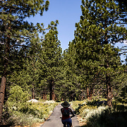 The Mammoth Lakes Town Loop path meanders through meadows and through tall pine trees while providing views of the Eastern Sierras.
