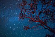 Ohia Tree, Milky Way, Kilauea Volcano; HVNP; Hawaii Volcanoes National Park; The Big Island of Hawaii; night; stars; star