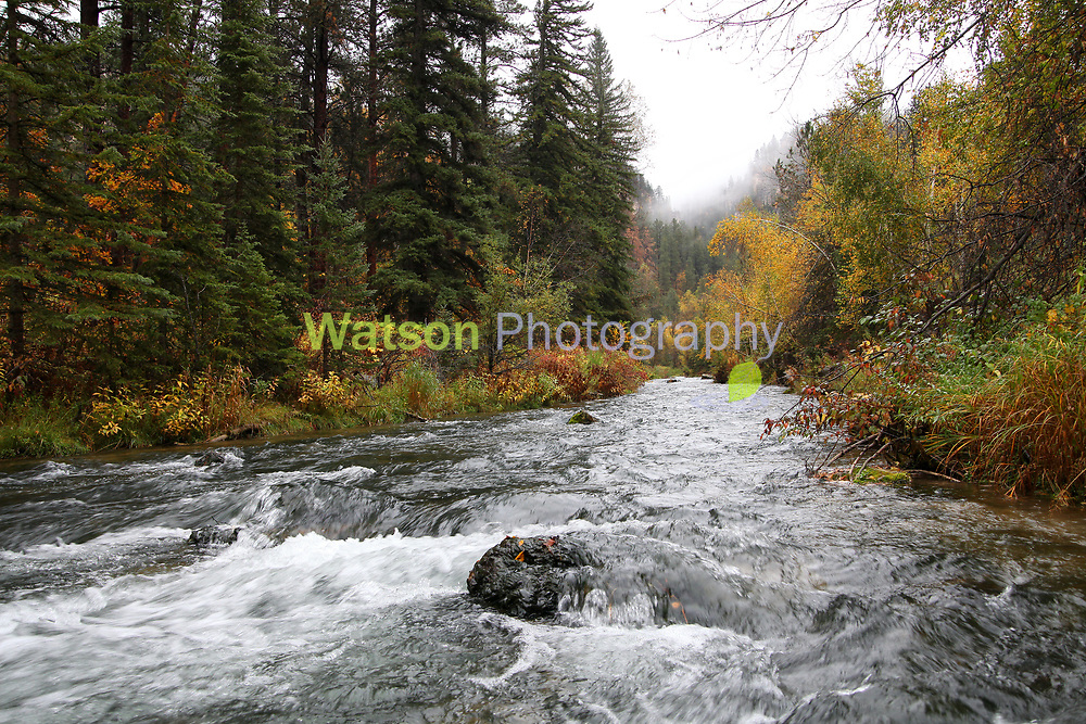 A foggy day in Spearfish Canyon