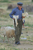 The shepherd. Lake Prespa National Park, Albania June 2009