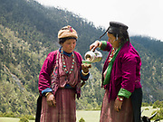 A Brokpa family drinks tea whilst preparing to migrate to their summer pastures with their 'zhomo' (male yak and female cow cross), Merak, Eastern Bhutan. The Brokpa, the semi-nomads of the villages of Merak and Sakteng are said to have migrated to Bhutan a few centuries ago from the Tshona region of Southern Tibet. Thriving on rearing yaks and sheep, the Brokpas have maintained many of their unique traditions and customs.