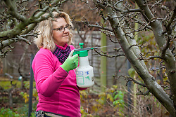 Spraying an apple tree with winter wash to reduce pests and diseases.