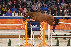 251 - Golddigger<br /> KWPN Stallion Selection - 's Hertogenbosch 2014<br /> © Dirk Caremans