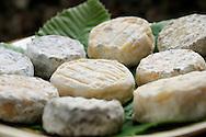 France, Languedoc Roussillon, Cevennes, Gard (30), fromage de chèvres, Pelardons