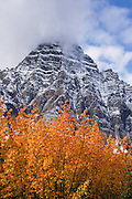 Mt. Chephren (3307 m or 10,850 ft) soars above orange and yellow fall colors in Mistaya River Valley, Icefields Parkway, Banff National Park, the Canadian Rockies, Alberta, Canada. Banff NP is Canada's oldest national park, established in 1885 in the Rocky Mountains, Alberta. Banff is part of the Canadian Rocky Mountain Parks World Heritage Site declared by UNESCO in 1984.