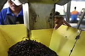 Costa Rica: COOCAFE Fairtrade Coffee