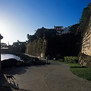 Cat walking along fortress.Puerto Rico, USA.