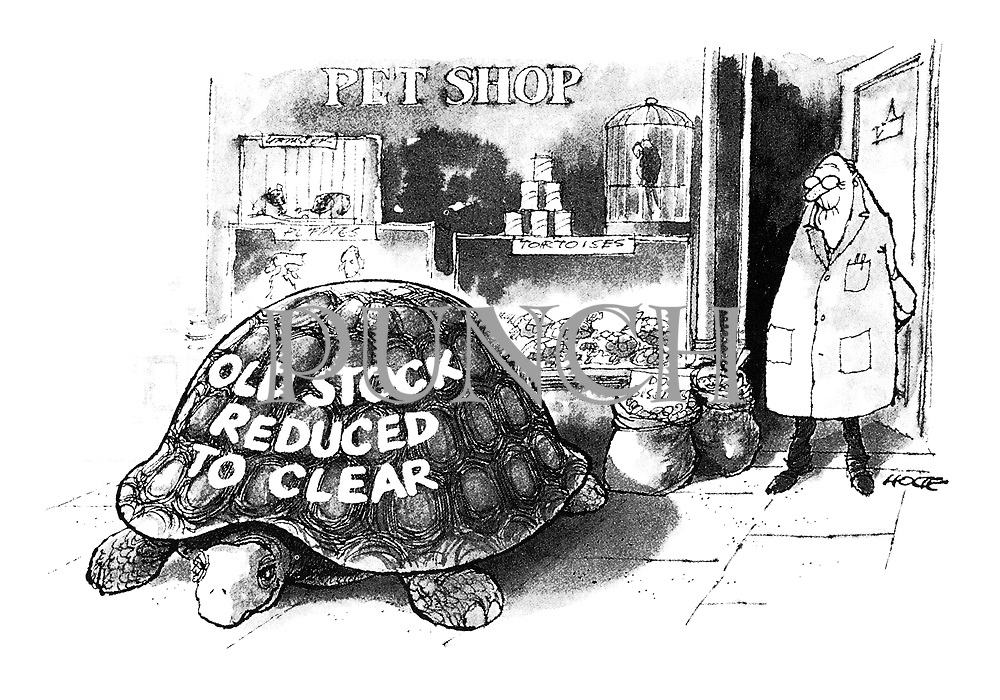 """(Giant tortoise in pet shop with """"Old Stock - Reduced to Clear"""" painted on shell.)"""